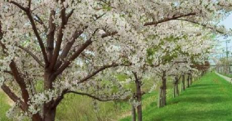 四季を彩る並木道